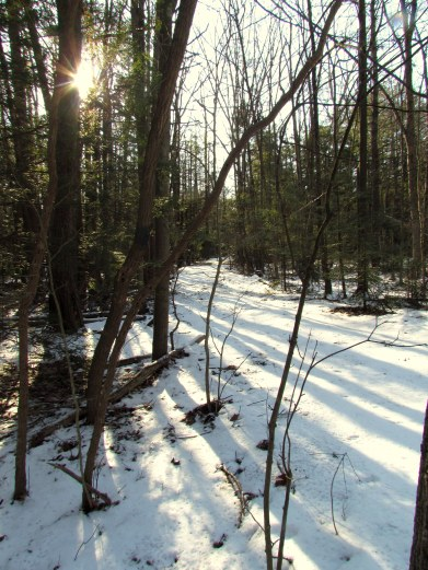 Somewhere out in the woods near Mazeppa...
