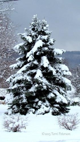 maryland tree dec 2013-001