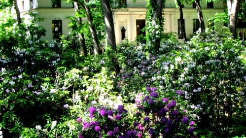 rhodos in bloom